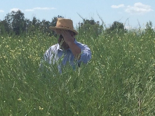 Steve Csonka in a field of carinata